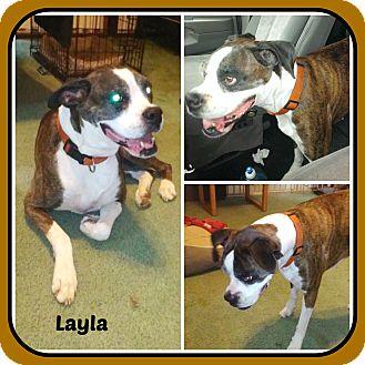 Boxer Dog for adoption in Malvern, Arkansas - LAYLA