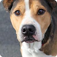Adopt A Pet :: Kal - Canton, CT