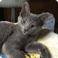 Adopt A Pet :: Limerick - Byron Center, MI