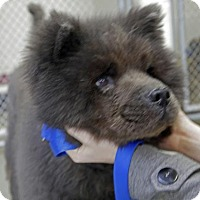 Adopt A Pet :: Smokey Bear - Kettering, OH