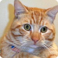 Adopt A Pet :: Cheddar - Wildomar, CA