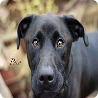 Adopt A Pet :: PACO - Peoria, IL