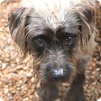 Adopt A Pet :: Sinclair - Bedminster, NJ