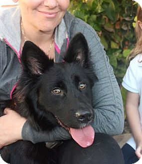 German Shepherd Dog Mix Dog for adoption in Miami, Florida - Abby