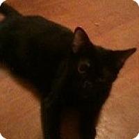 Adopt A Pet :: M&M - Justin, TX