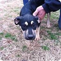 Adopt A Pet :: Yukon - Blanchard, OK