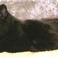 Adopt A Pet :: Trevor - Chesterland, OH