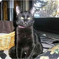 Adopt A Pet :: Gabbie - New Port Richey, FL