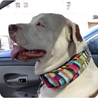 Adopt A Pet :: Frostie Cupcake - Sacramento, CA