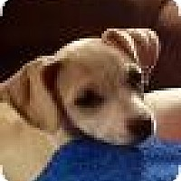 Adopt A Pet :: Princess Diana - Shawnee Mission, KS