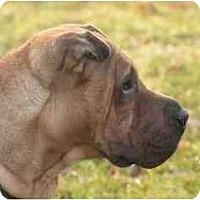 Adopt A Pet :: Tatum - Rigaud, QC