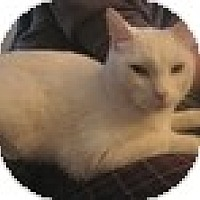 Adopt A Pet :: Sky - Vancouver, BC