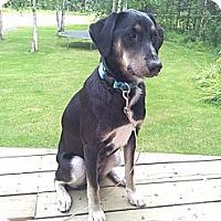 Adopt A Pet :: Lola - Wasilla, AK