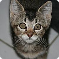 Adopt A Pet :: Alvina - Arlington, VA