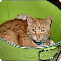 Adopt A Pet :: Alani - Cleveland, OH