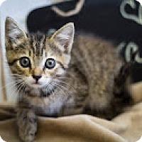 Adopt A Pet :: Aurora - Coral Springs, FL