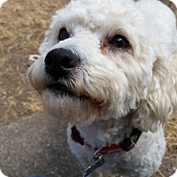Adopt A Pet :: Lucky - Adoption Pending - Gig Harbor, WA