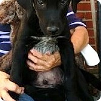 Adopt A Pet :: Bear - Homer, NY