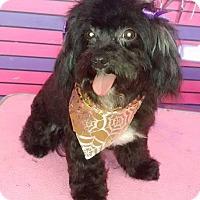Adopt A Pet :: Marshmallow - San Diego, CA
