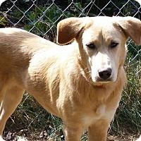 Adopt A Pet :: Suzie - Homer, NY