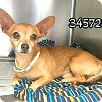 Adopt A Pet :: PALBO - San Antonio, TX
