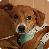 Adopt A Pet :: Jack - Andalusia, PA