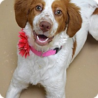 Adopt A Pet :: Daisy - Dublin, CA