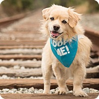 Adopt A Pet :: Emmet - Pacific Grove, CA