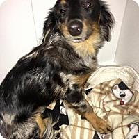 Adopt A Pet :: Bandit - York, SC
