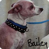 Adopt A Pet :: Bailey - Yuba City, CA