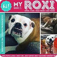 Adopt A Pet :: Roxi - New Port Richey, FL