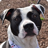 Adopt A Pet :: Buck - Wilmington, NC