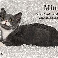 Adopt A Pet :: Miu - Ortonville, MI