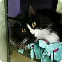Adopt A Pet :: Krissy - Medina, OH