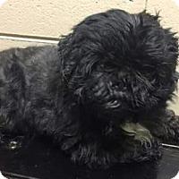 Adopt A Pet :: Lucy - Centerville, GA