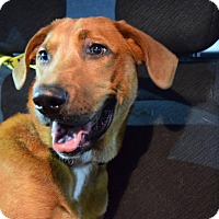 Adopt A Pet :: Darwin - Manassas, VA