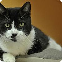 Adopt A Pet :: Freddy - Rockport, TX