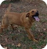 Labrador Retriever/Shepherd (Unknown Type) Mix Dog for adoption in Washington, D.C. - Etta James-I'm in New England!