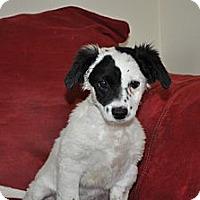 Adopt A Pet :: Wilson - Tumwater, WA