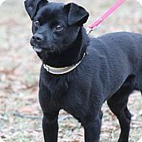 Adopt A Pet :: Noah - Wytheville, VA