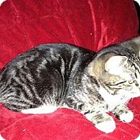 Adopt A Pet :: Bobbie - Simpsonville, SC