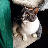 Adopt A Pet :: Richie - Jamaica Plain, MA