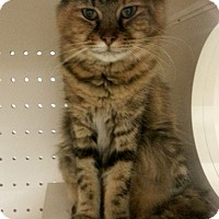 Adopt A Pet :: Saffron - Orange City, FL