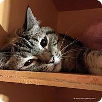 Adopt A Pet :: Luci - Tucson, AZ
