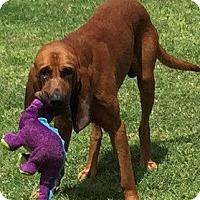 Adopt A Pet :: Otis - Fayetteville, AR