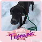 Adopt A Pet :: Turmeric