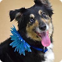Adopt A Pet :: Kita - Dublin, CA