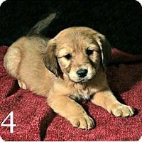 Adopt A Pet :: Grace Ann - Lufkin, TX