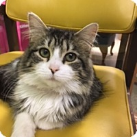 Adopt A Pet :: Gaelic - Medina, OH
