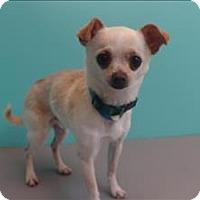 Adopt A Pet :: Conner - Portland, OR